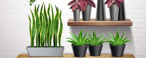 How to Make an Artificial Plant Wall to Showcase Your Favourite Faux Plants