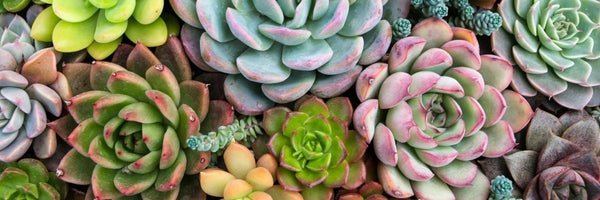 What Are the Best Faux Plants for Summer?