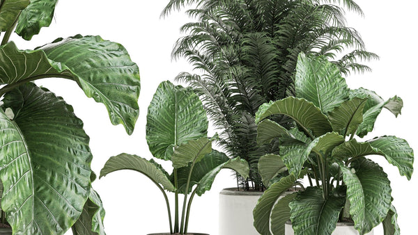 Top 5 Plants You Need to See on Cyber Monday Deal
