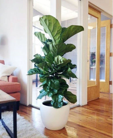Top Artificial plants must have for 2020 | Artiplanto
