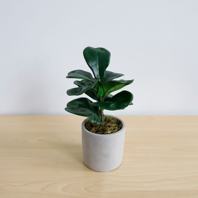 Veri Artificial Fiddle Ficus Lyrata Potted Plant