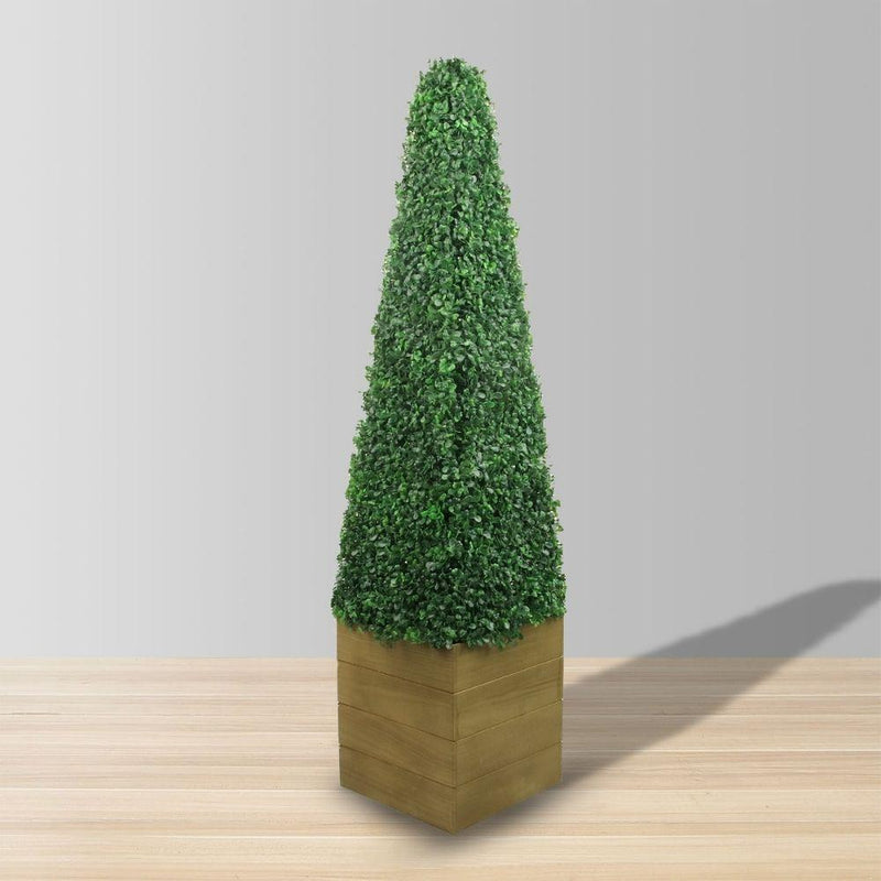 Mayer Potted Boxwood Topiary Plant (Multiple Sizes)