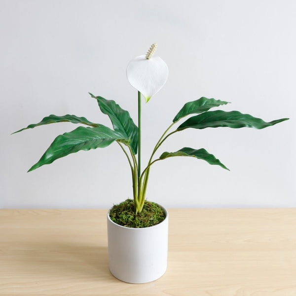 Lisa Artificial Spathiphyllum Potted Plant