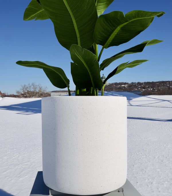 SAVANA CEMENT PLANTER (Multiple Sizes)