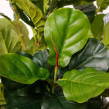 ADELIA ARTIFICIAL FIDDLE LEAF POTTED PLANT 10' ArtiPlanto