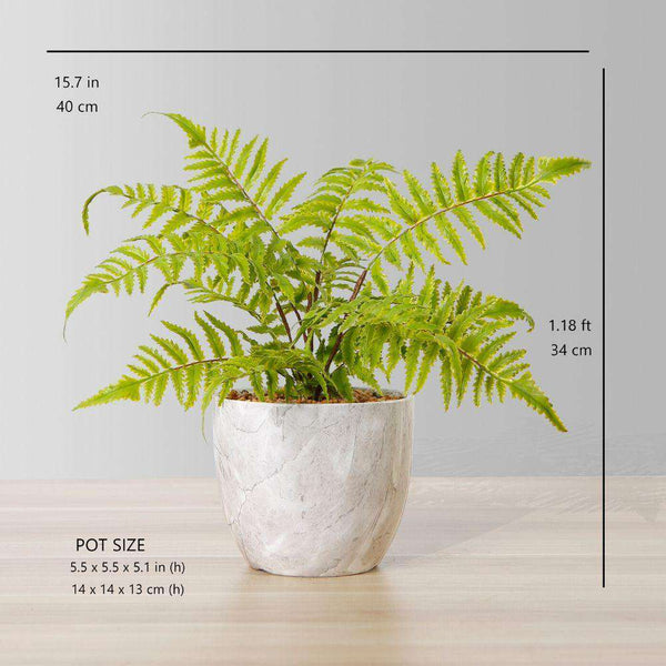 BERA POTTED FAUX FERN ArtiPlanto