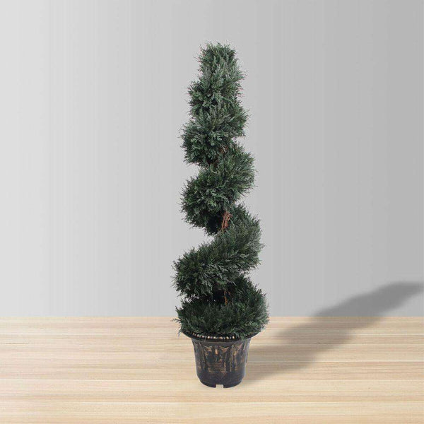 PERTH Faux Potted Spiral Boxwood Topiary Plant (MULTIPLE SIZES) ArtiPlanto