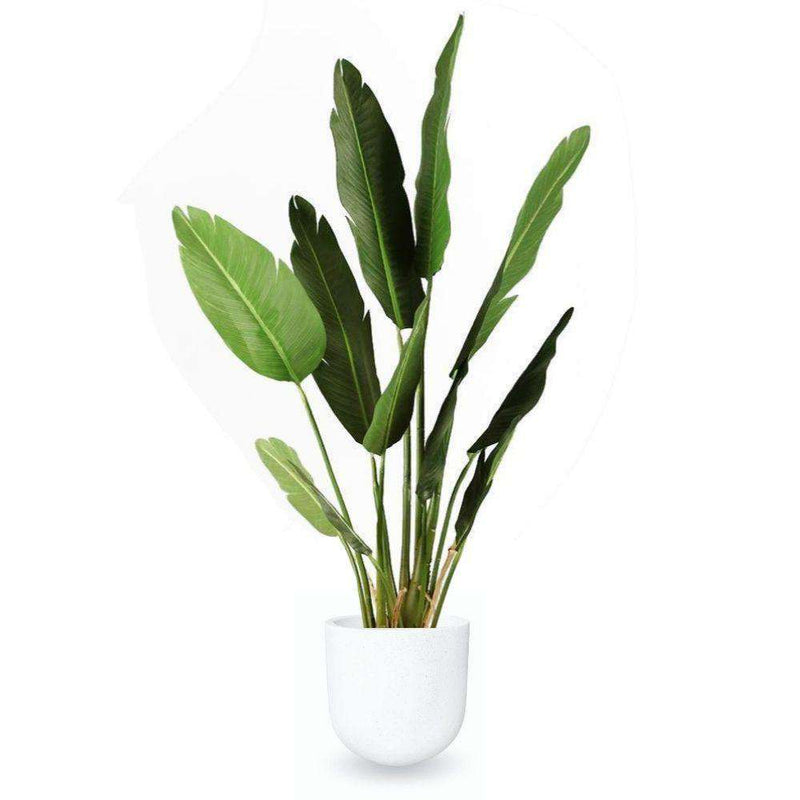 Safi Cement Planter (Multiple Sizes) ArtiPlanto