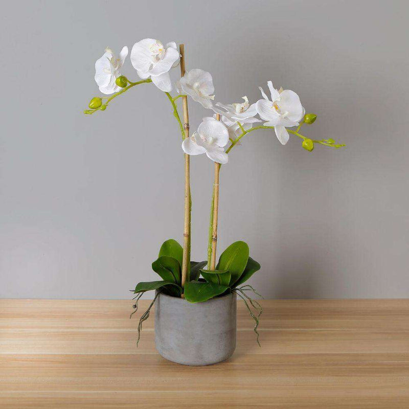Tampico Faux Potted Orchid Floral Arrangement 24 Inches ArtiPlanto