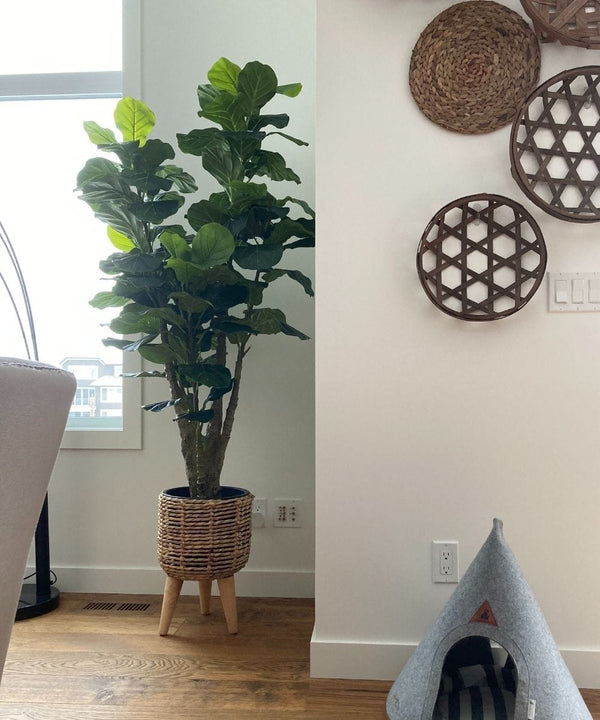 PICO Artificial Fiddle Leaf Potted Plant 5.5'