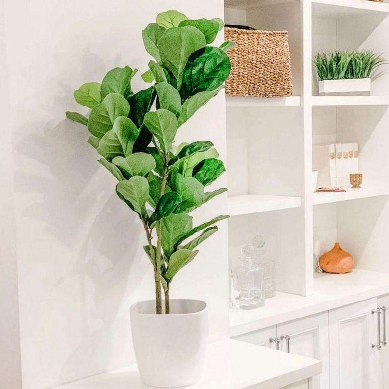 FAFA Artificial Fiddle Leaf Potted Plant (Multiple Sizes) Potted Artificial Plant ArtiPlanto
