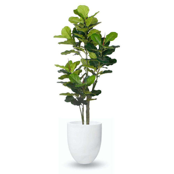 YELAPA CEMENT PLANTER (multiple sizes) ArtiPlanto