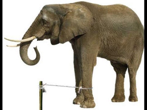The Story of the Elephant and The Rope