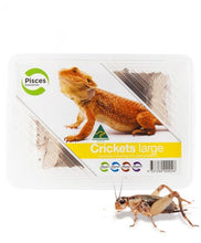 Load image into Gallery viewer, PISCES LIVE CRICKET TUB LG