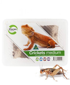 PISCES LIVE CRICKET TUB MD