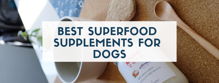 Trending Superfood Supplement For Dogs That You Need To Know