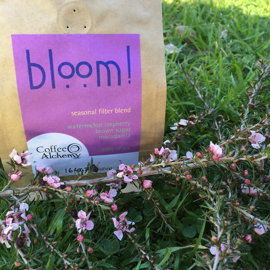 bloom! - seasonal Filter Blend