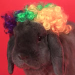 Fashion & Cute Pet Decorative Wig