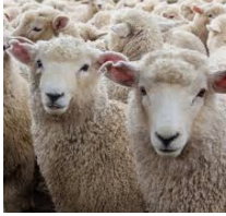 Your guide to merino wool