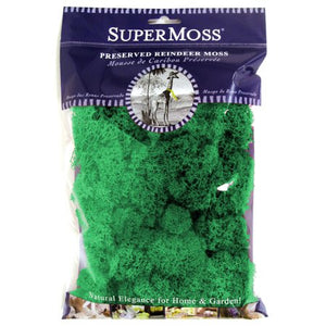 Reindeer Moss - Forest Preserved