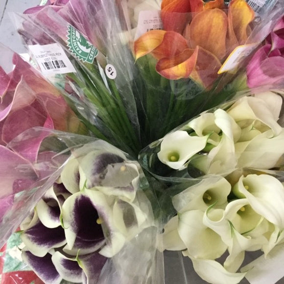Calla Poesy, Assorted