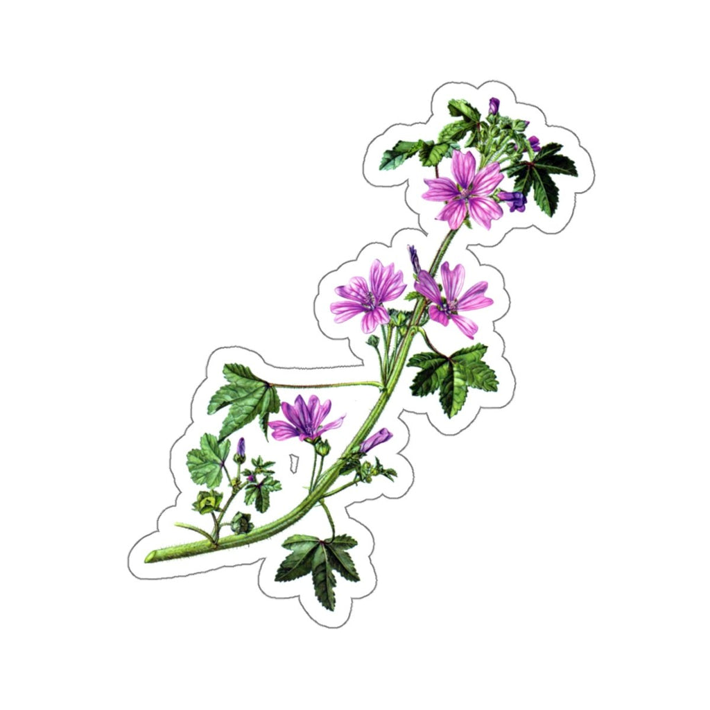 Common Mallow botanical sticker