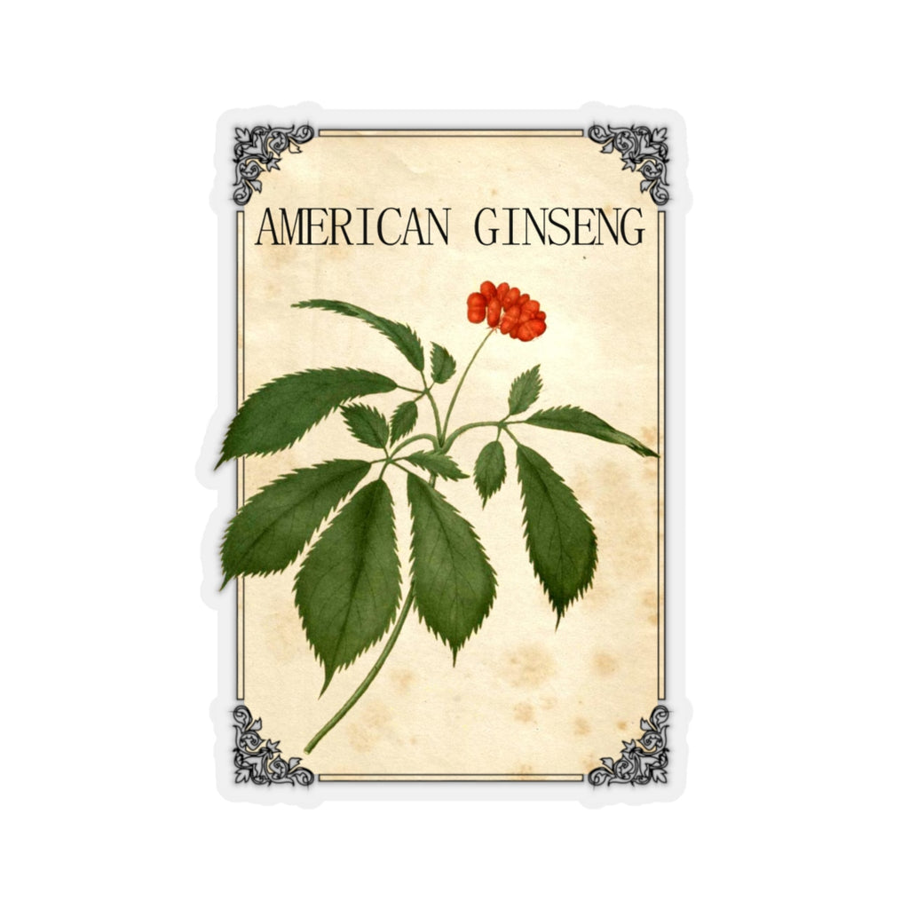 American Ginseng Herb Label Sticker - Vintage Herb & Spice Labels