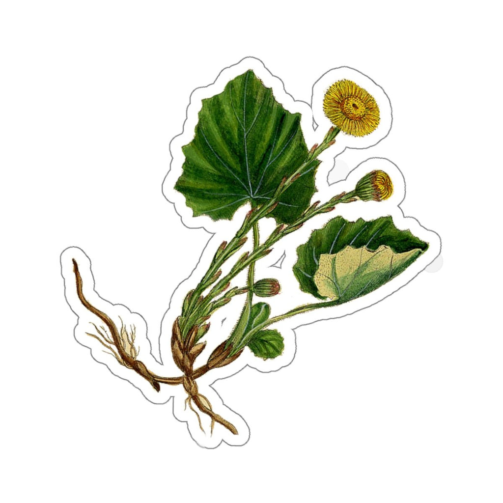 Coltsfoot plant sticker