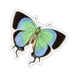 Butterfly Balintus tityrus Stickers