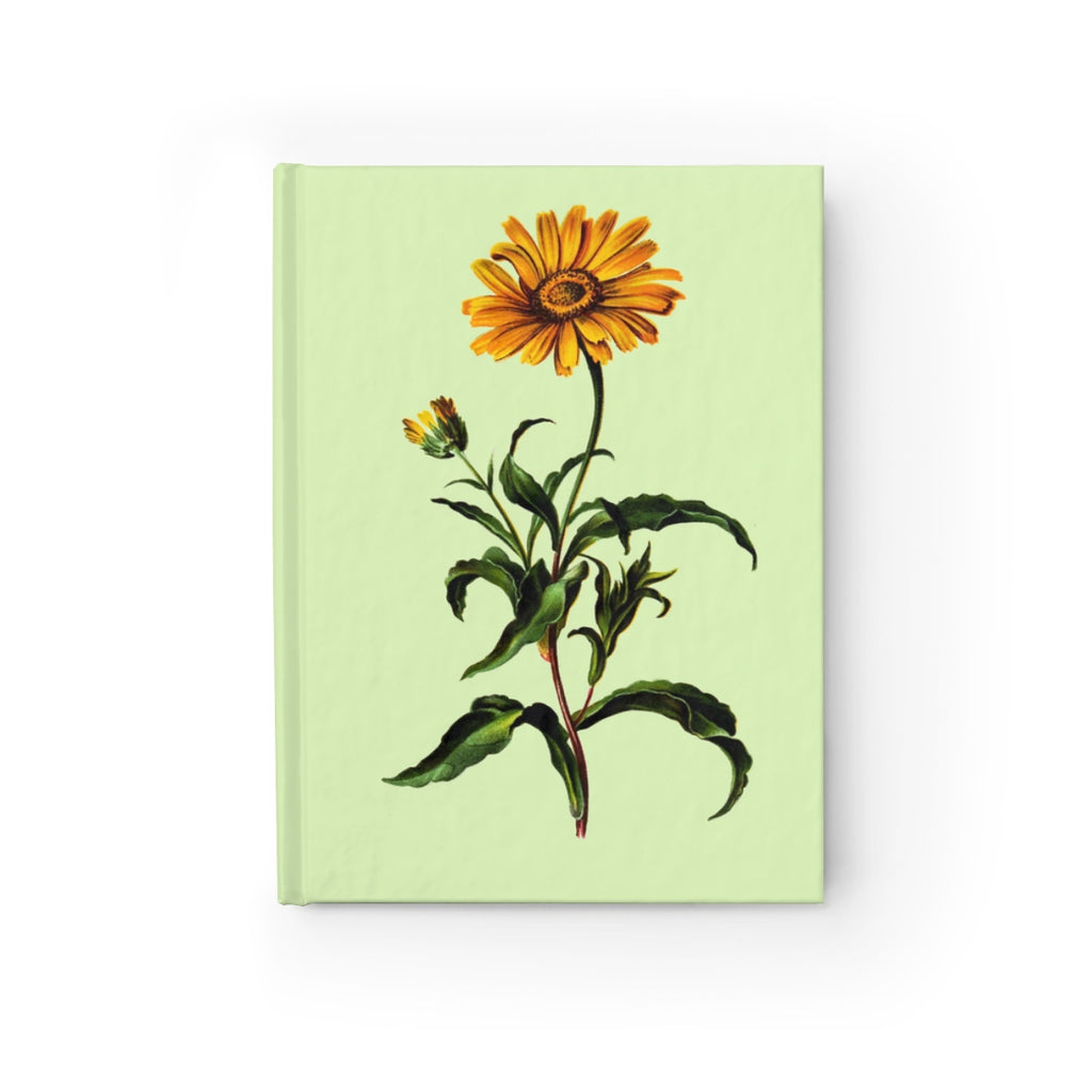 Ox-Eye (Buphthalmum Salicifoliu)  Botanical Illustration Journal