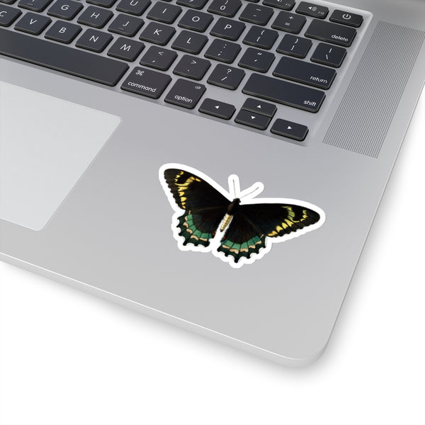 Butterfly Papilio philetas Stickers