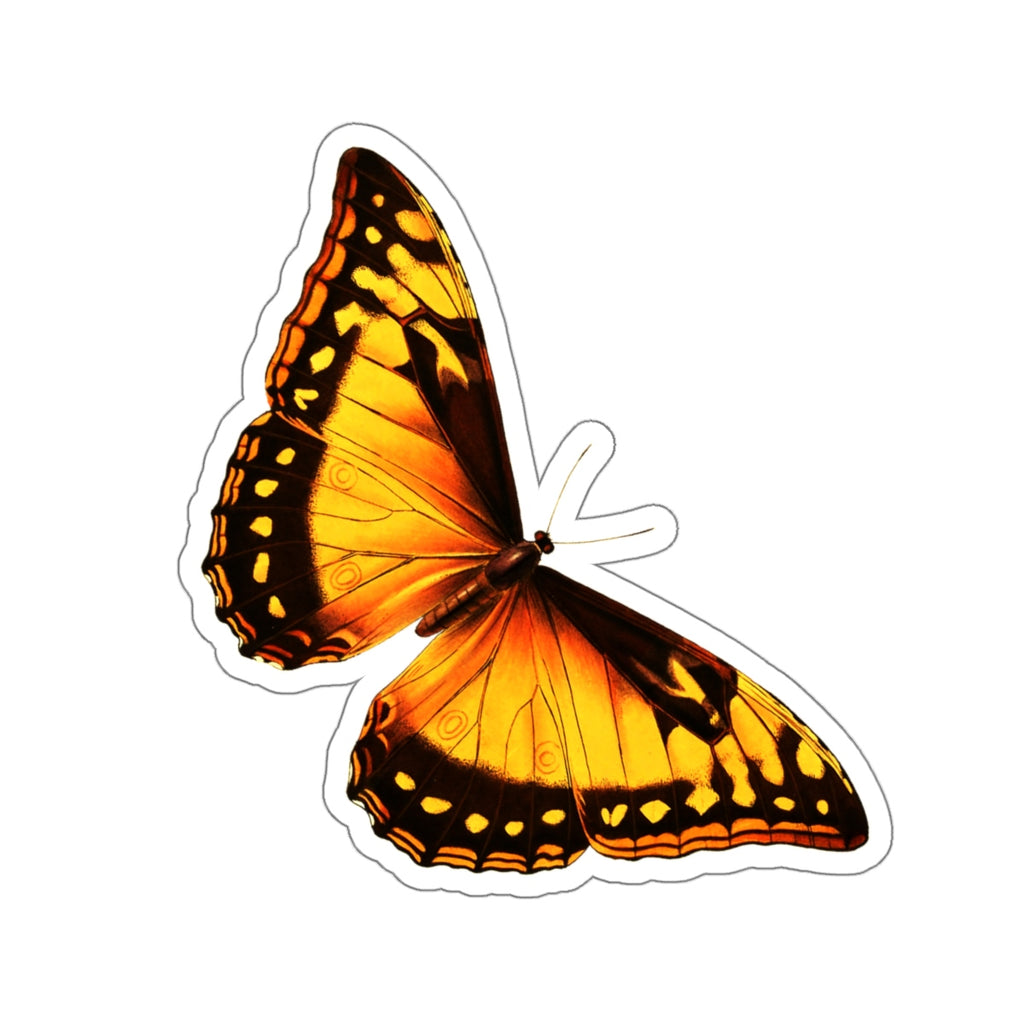 Butterfly | Morpho cypris | Stickers