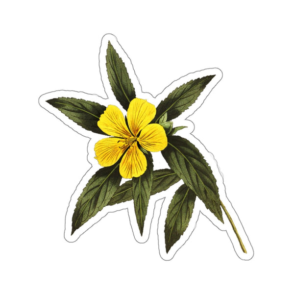 Damiana botanical sticker