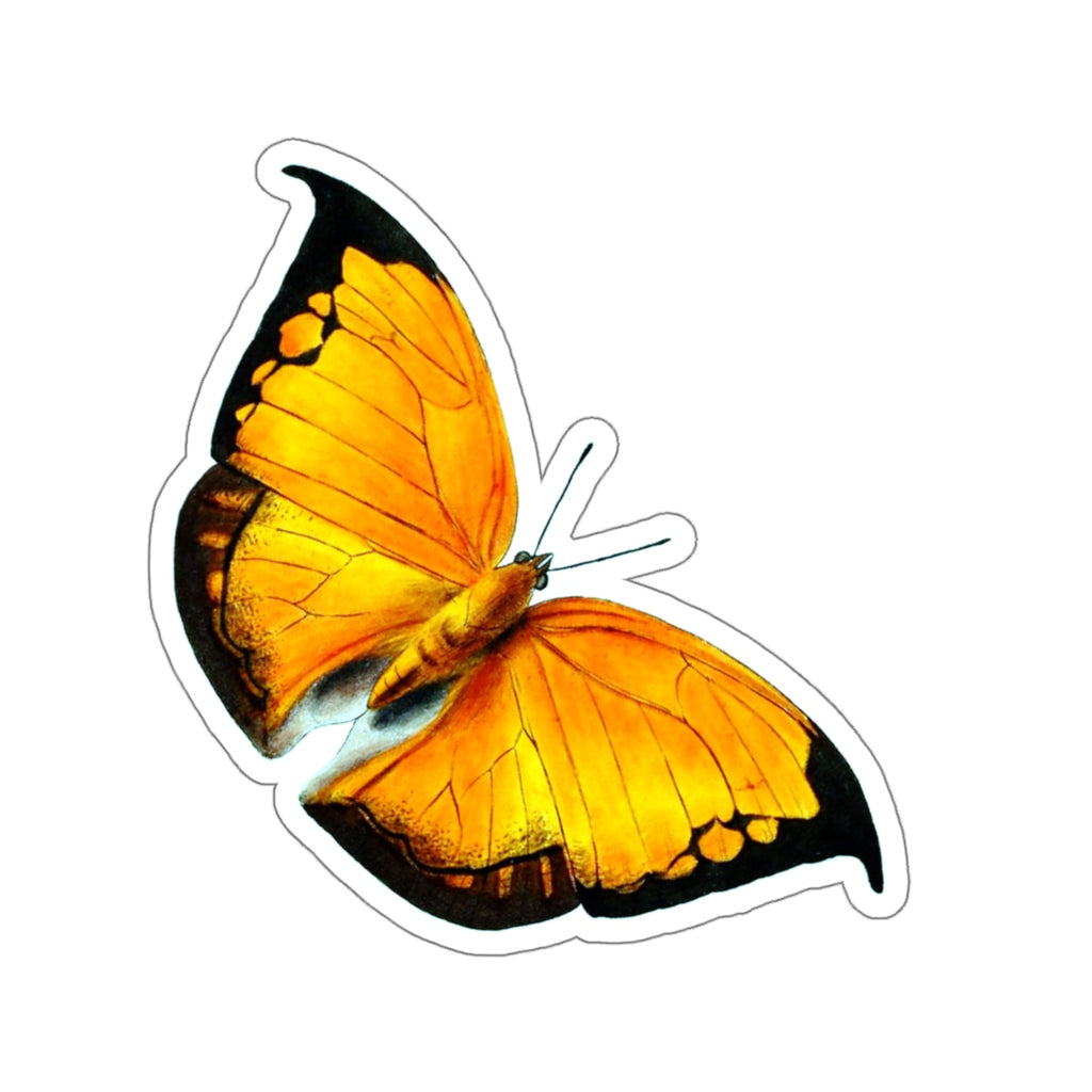 Butterfly | Coenophlebia archidona | Magnificent Leafwing | Stickers