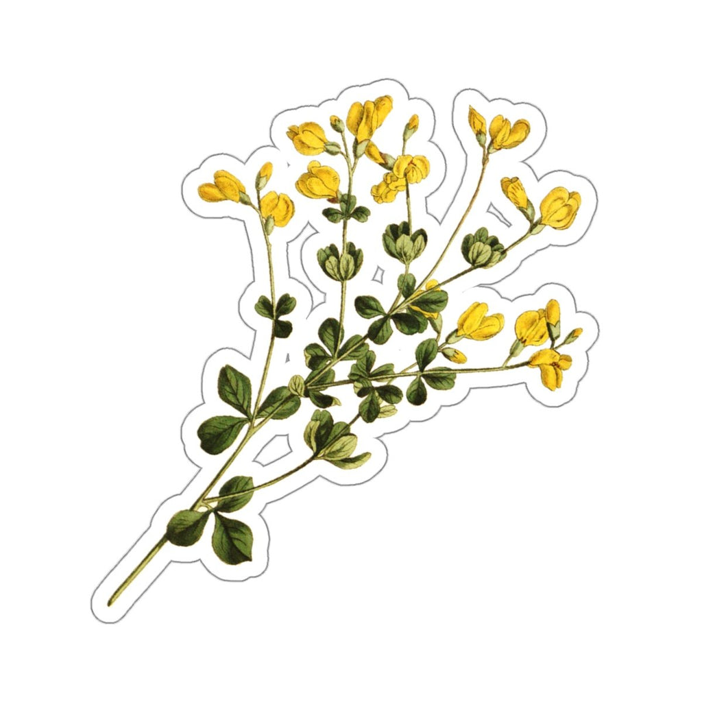 Wild Indigo botanical stickers