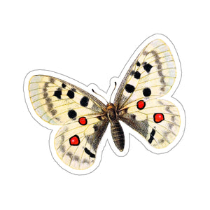Butterfly Parnassius apollo Stickers