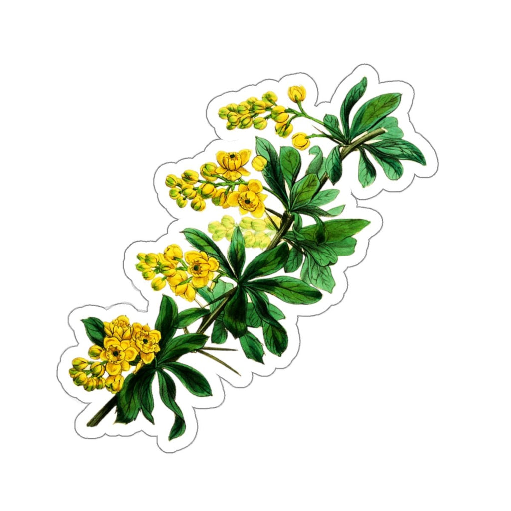 Barberry botanical stickers