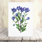 balloon flower vintage print