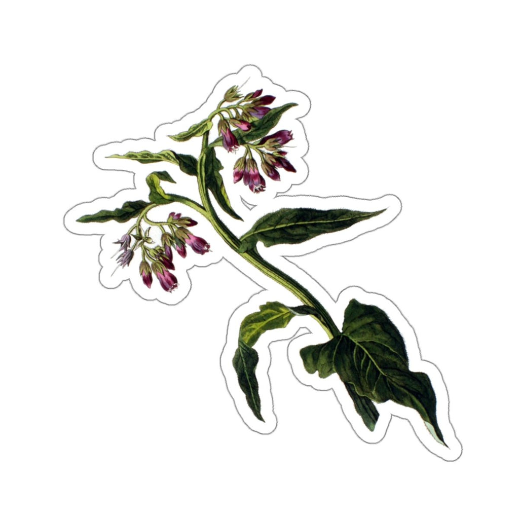 Comfrey botanical sticker
