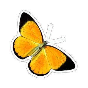 Butterfly | Pieris aruna | Stickers