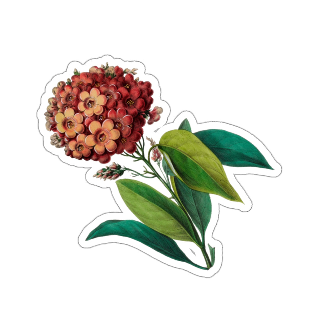 Geiger Tree | Cordia Sebestena | Botanical Illustration | Stickers