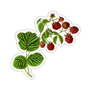 Raspberry Sticker