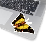 Butterfly | Nymphalis nitebis | Stickers