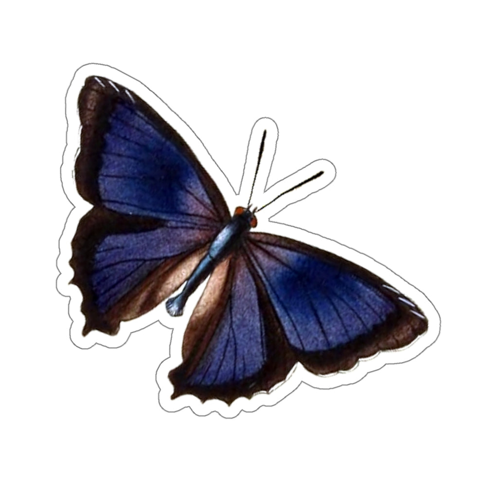 Butterfly | Ogyris zosine | The Northern Purple Azure | Stickers