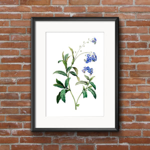 Botanical Print · Forget Me Not Botanical Posters | Vintage Flower Print or Plant Print. Perfect Botanical Art Print and Botanical Decor