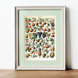 various fruit botanical print