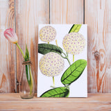 Hoya globulosa Botanical Illustration Canvas Print