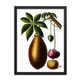 Baobab | Adansonia Digitata | Botanical Illustration | Framed Poster