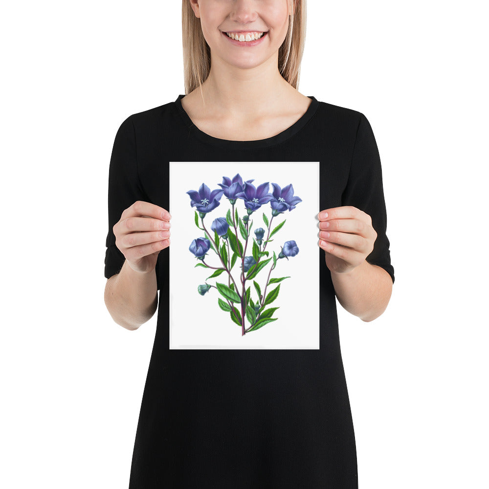 Balloon Flower Botanical Posters  | Vintage Flower Print or Plant Print