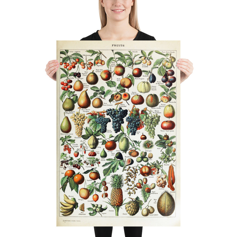 various fruit botanical print 24x36